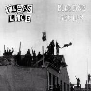 Fleas And Lice – Bleeding Rectum
